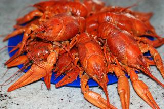 Boiled crawfish (bigs)